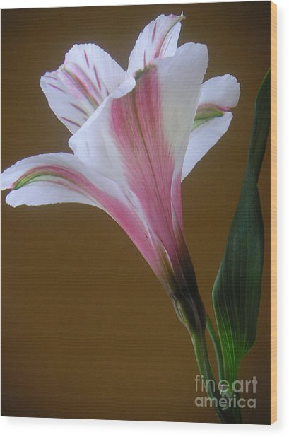 Alstroemeria - Reaching Wood Print by Lucyna A M Green