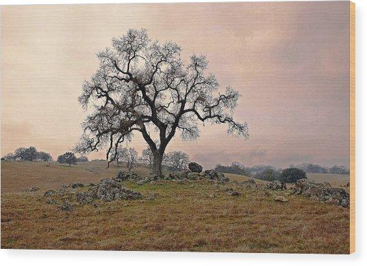 Amador Oak Wood Print by M Ryan