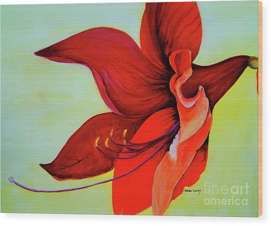 Amaryllis Blossom Wood Print