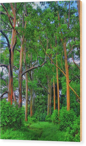 Amazing Rainbow Eucalyptus Wood Print
