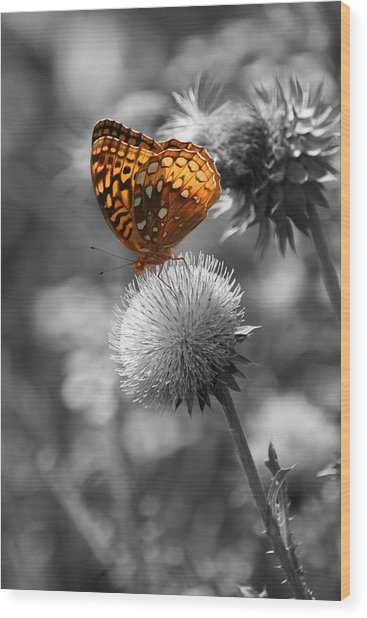 Amber Butterfly Colorized Wood Print