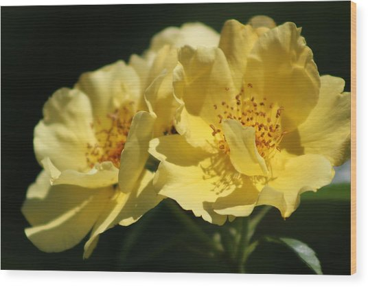 Amber Yellow Country Rose Wood Print