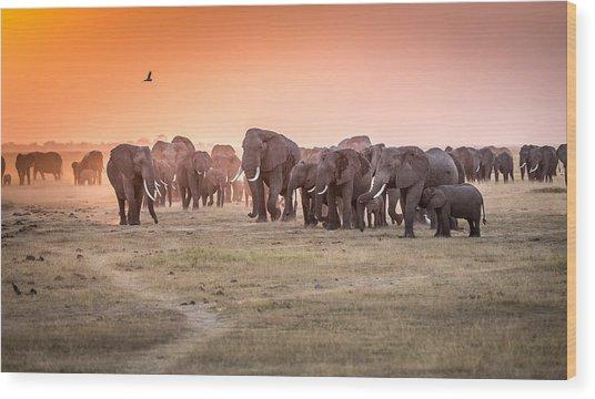 Amboseli Morning Stroll To Starbucks Wood Print