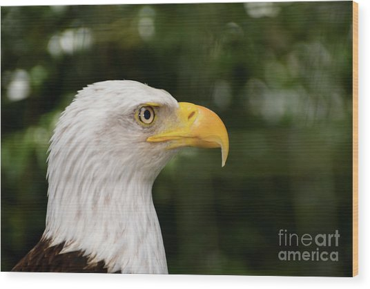 America The Great Wood Print