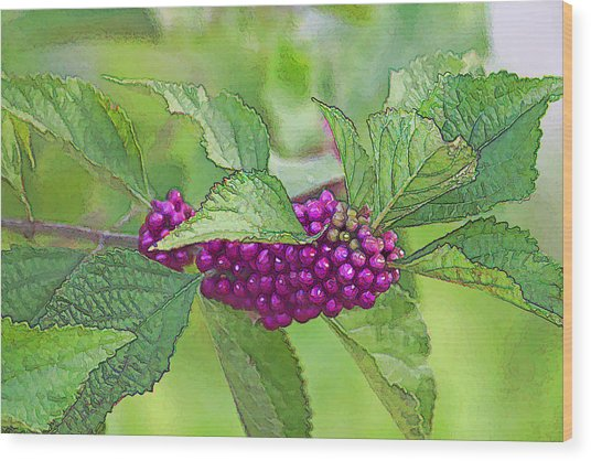 American Beautyberry Wood Print