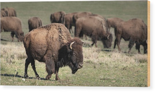 Wood Print featuring the photograph American Bison 5 by James Sage