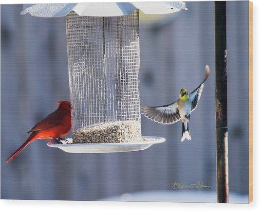 American Goldfinch Inbound Wood Print