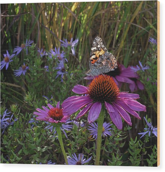 American Painted Lady On Cone Flower Wood Print
