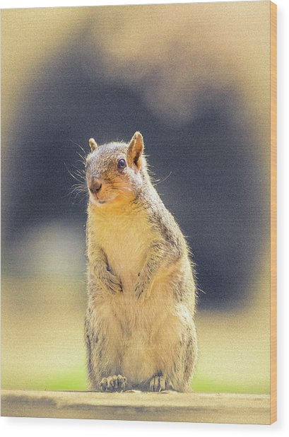 American Red Squirrel Wood Print