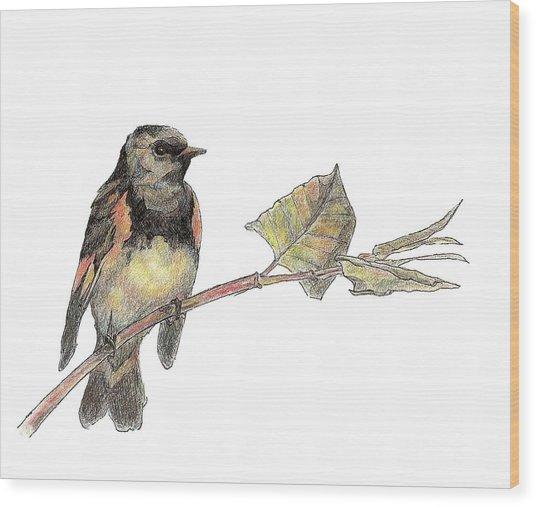 American Redstart Wood Print