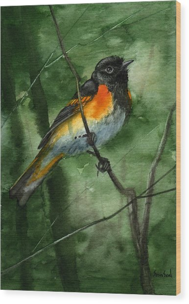 American Redstart Wood Print by Sean Seal
