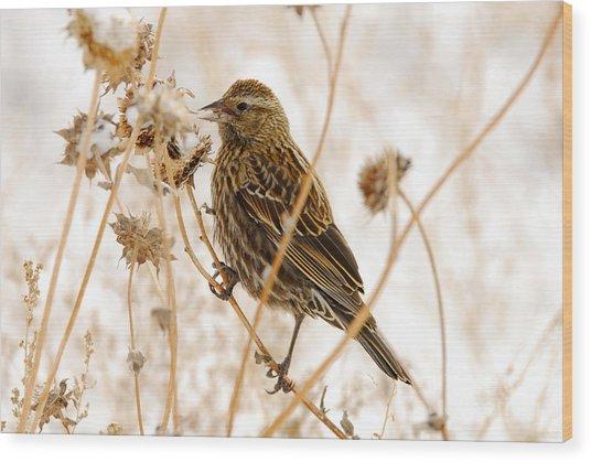 American Sparrow Wood Print by Dennis Hammer