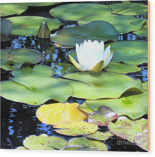American Water Lilies Four Wood Print