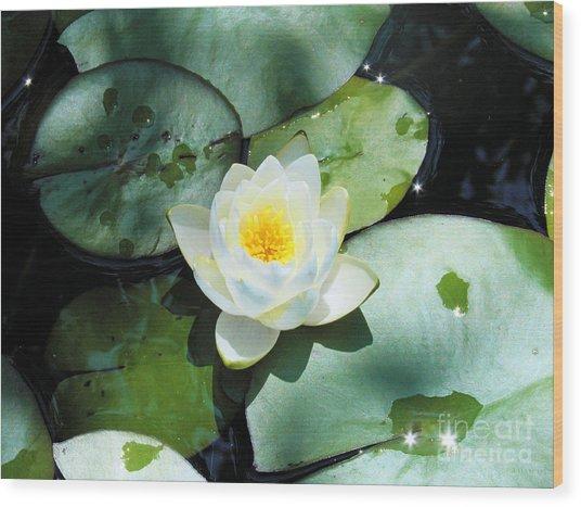 American Water Lilies Wood Print