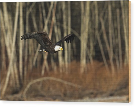 America's Finest Wood Print