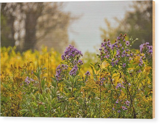 Amethyst And Golden Rod Wood Print by JAMART Photography