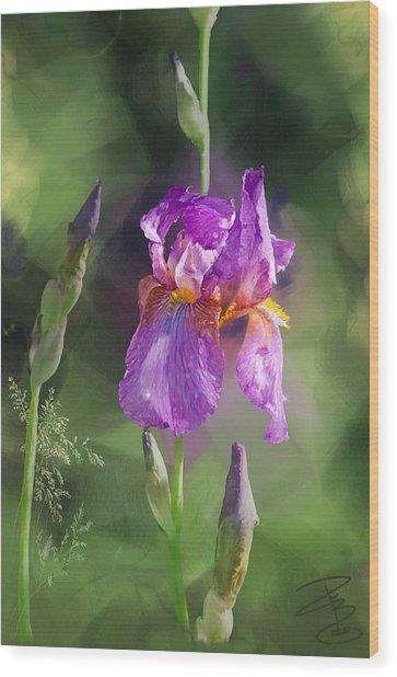 Amethyst Iris 2 Wood Print