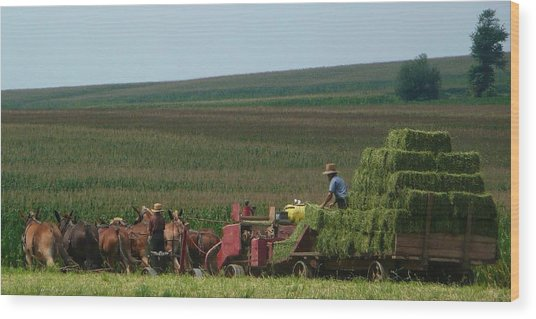 Amish Farm Wood Print