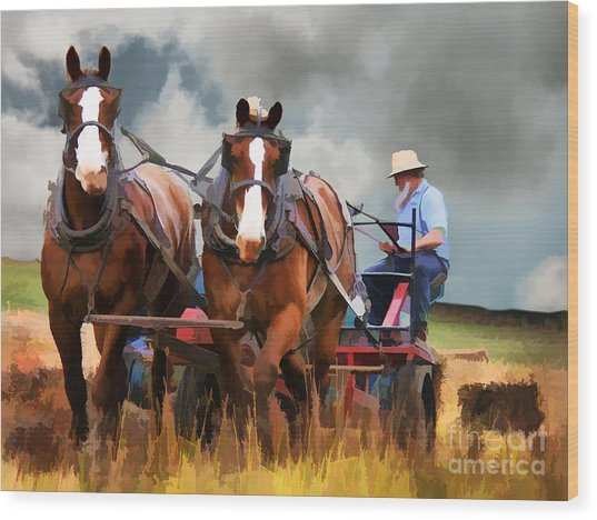 Amish Farmer Wood Print
