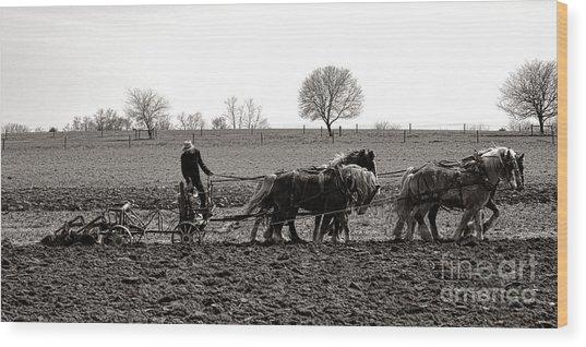 Amish Farming Wood Print