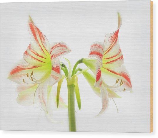 Amorice Wood Print