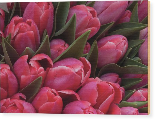 Amsterdam Red Tulips Wood Print