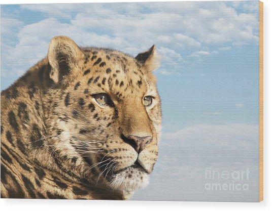 Amur Leopard Against Blue Sky Wood Print