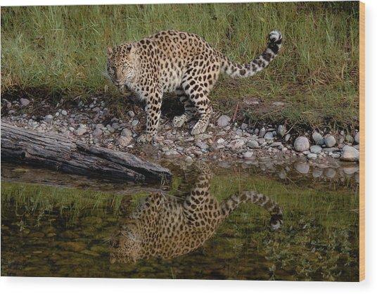 Amur Leopard Reflection Wood Print