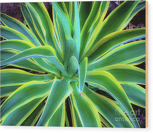 An Agave In Color  Wood Print