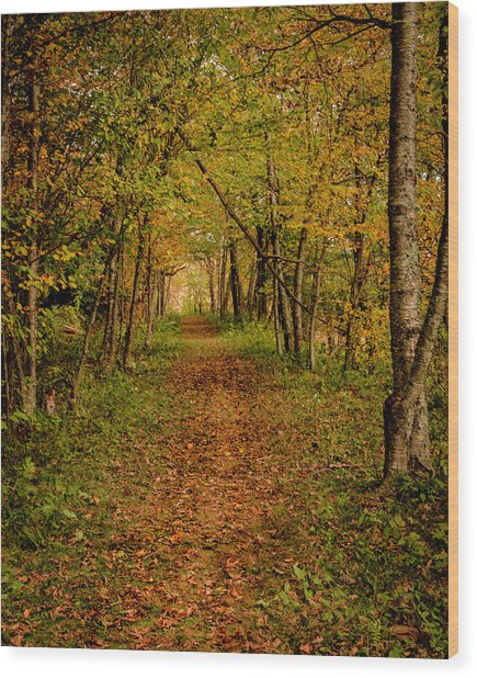 An Autumn's Walk Wood Print