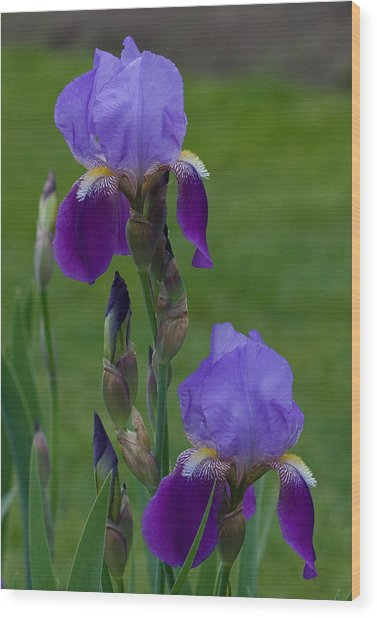 An Iris Picture Wood Print