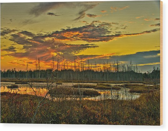 An November Sunset In The Pines Wood Print