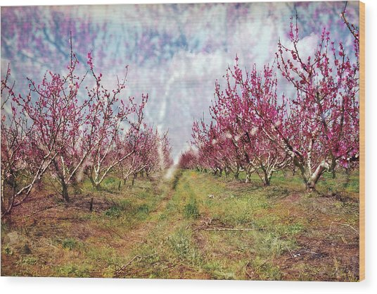 An Orchard In Blossom In The Golan Heights Wood Print