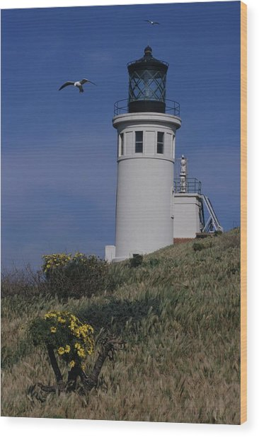 Anacapa Lighthouse And Western Gulls Wood Print