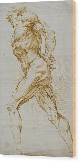 Anatomical Study Wood Print