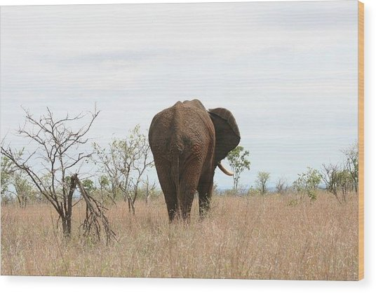 Ancient Elephant Wood Print by Debbie Cundy