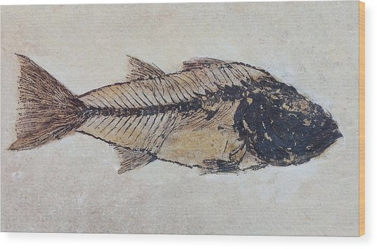 Wood Print featuring the digital art Ancient Fish by Julian Perry