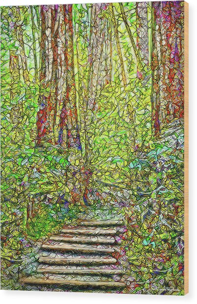 Ancient Forest Path - Tamalpais California Wood Print