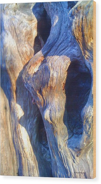 Ancient Giant Arborvitae 2 Wood Print by Karl Reid