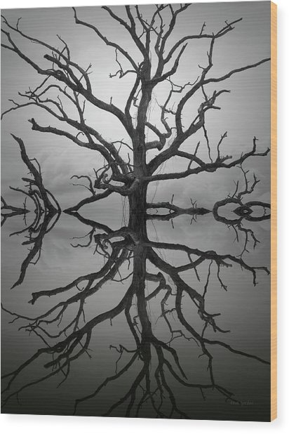 Ancient Oak Tree Montage Wood Print