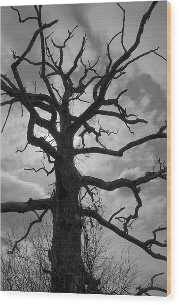 Ancient Oak Tree No. 4 Wood Print