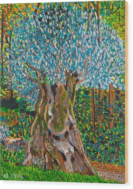 Ancient Olive Tree Wood Print