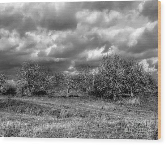 Ancient Orchard Wood Print