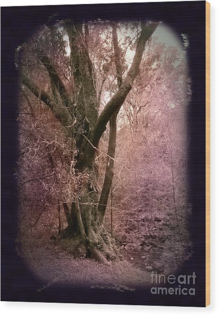 Ancient Tree By A Stream Wood Print by Laura Iverson