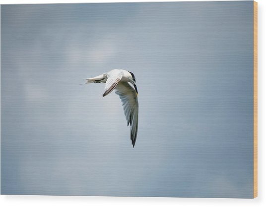 And Still The World Terns Wood Print