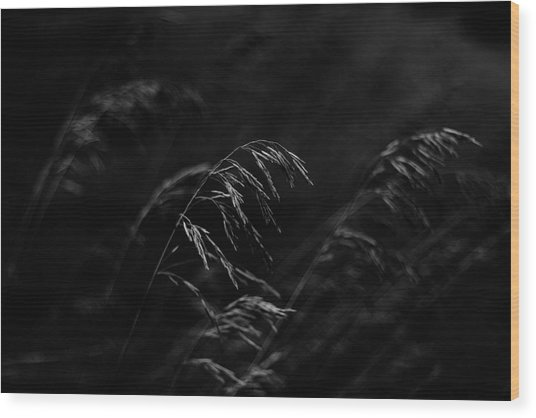 And Yet More Darkness Wood Print