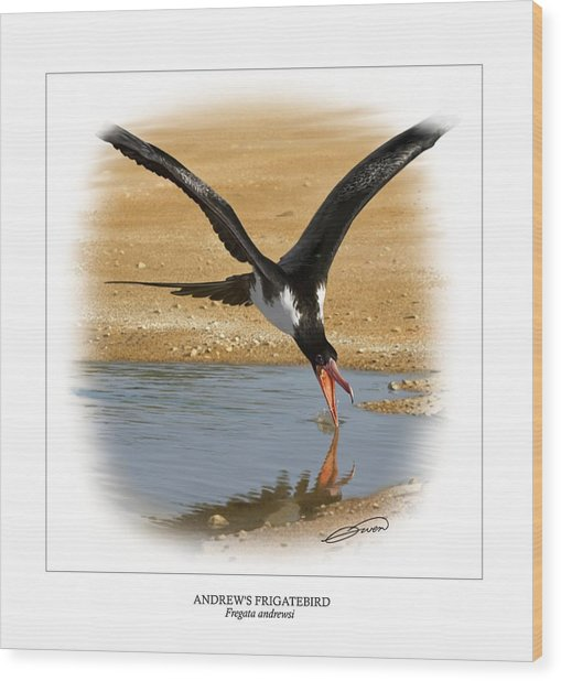 Andrews Frigatebird Fregata Andrewsi 4 Wood Print by Owen Bell