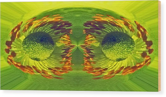 Anemone Eyes. Wood Print by Terence Davis