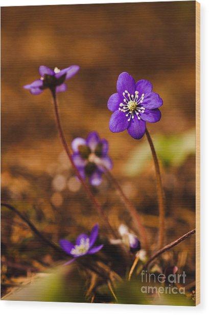 Anemone Hepatica Wood Print