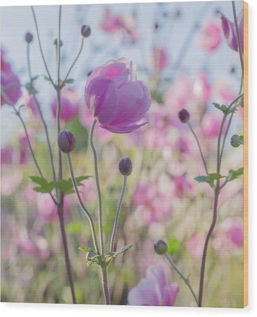 Anemone Softness  Wood Print